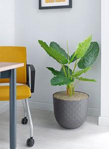 Design alocasia matt headrow planter