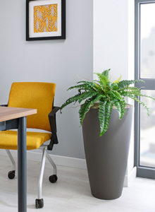 Boston Fern Design Planter